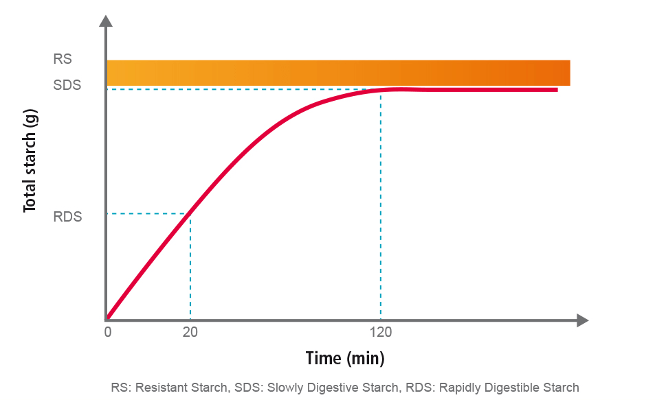 graph showing rate of starch digestion as a function of time